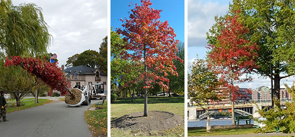 Esplanade Park Tree Management