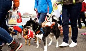 EA-Canine-Promenade