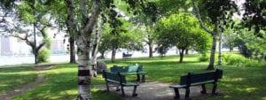esplanade association birch-trees